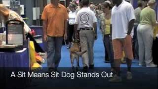 Sit Means Sit Of Palm Beach County- Home Show At Palm Beach Convention Center