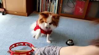 大谷選手 応援犬(It's sho time)Dog loves Shohei Ohtani(大谷選手入場曲)Wrapped up 卓上ベル Desk bell