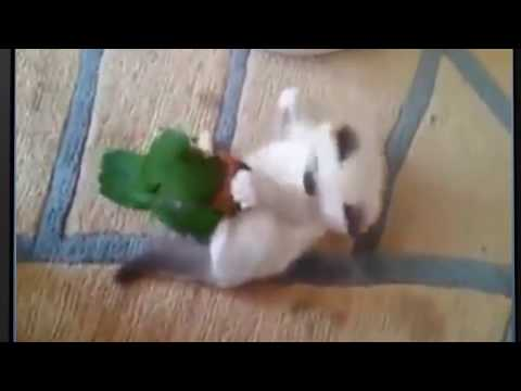 funny cat and cute parrot 2017