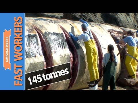 Thumbnail: Fast Workers #20 - Amazing Cutting skills (Cutting Blue Whale 145 tonnes)