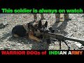 Army Dogs vs Terrorists : Top 5 Legendary Indian Army Dogs