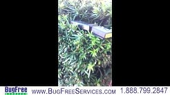2014 Bradenton Bed Bug Heat Treatment