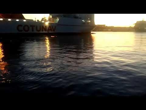 2 Baleines dans le port autonome de marseille le 11 octobre 2017