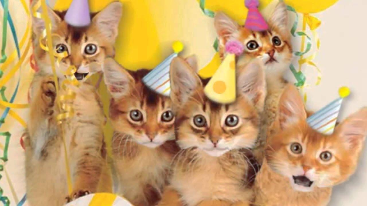 Happy Birthday Cat Singing Youtube