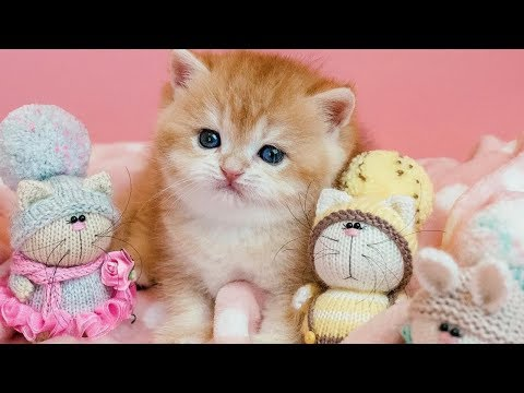 This Golden Baby Kitten Will Melt Your Stress Away