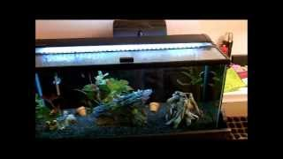 "Marineland Single Bright Led Aquarium Light 36"" - 48"" Review"