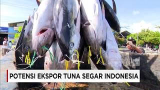 Potensi Ekspor Tuna Segar Indonesia