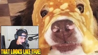 Cloakzy Reacts To Daily Dose Of Internet!