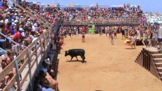 BOUS A LA MAR DENIA (13-7-09) Bousapaiporta.es