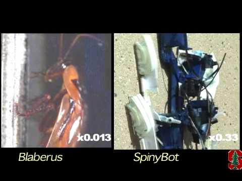 Stanford SpinyBot