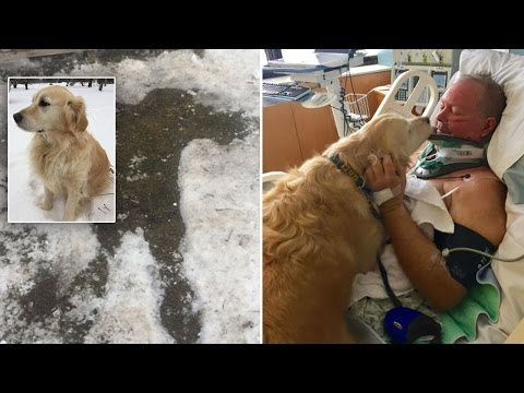 Thumbnail: Dog Helps Keep Owner Alive After Paralyzing Fall Traps Him In Snow For 20 Hours