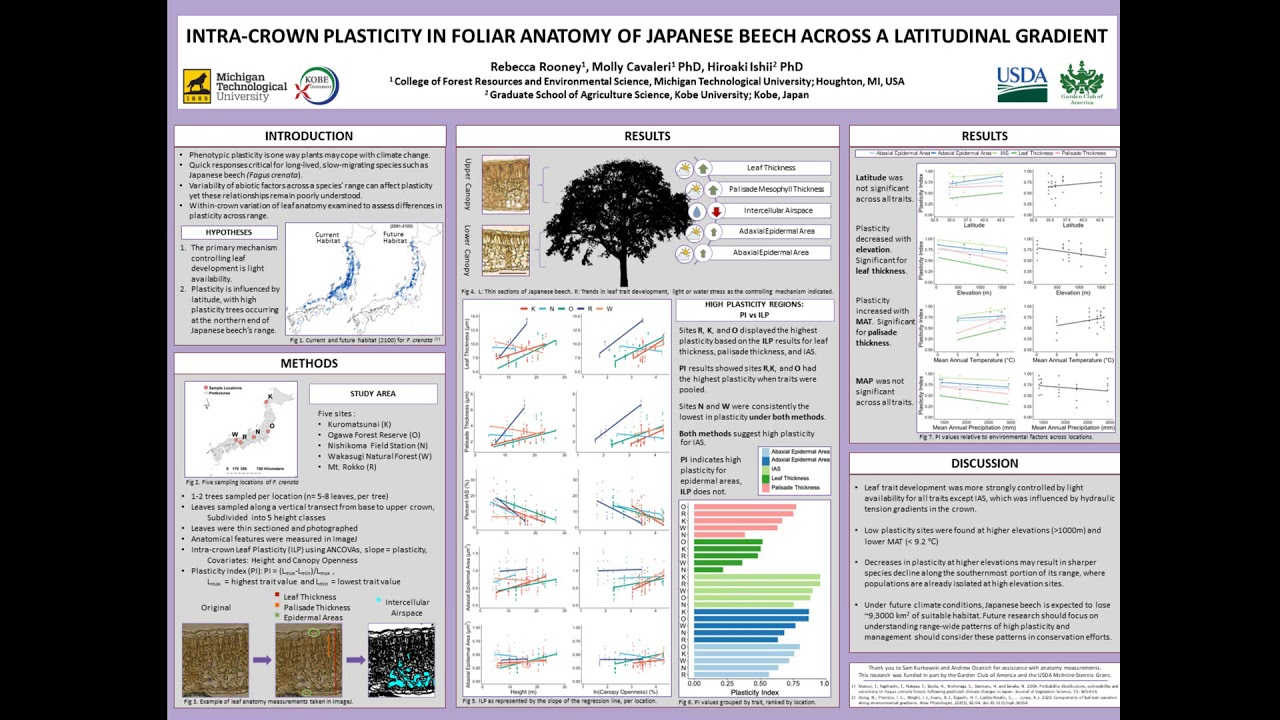 Preview image for Assessing Intra-crown Plasticity via Foliar Anatomy of Japanese Beech Across a Latitudinal Gradient video