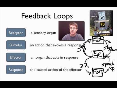 Elements of a Feedback Loop