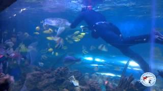 Киевский океанариум - кормление черепахи(Дайвер кормит морскую черепаху в Киевском океанариуме