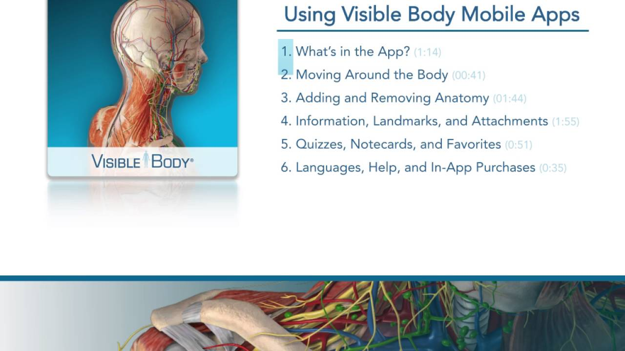 Visible body muscle premium free download.
