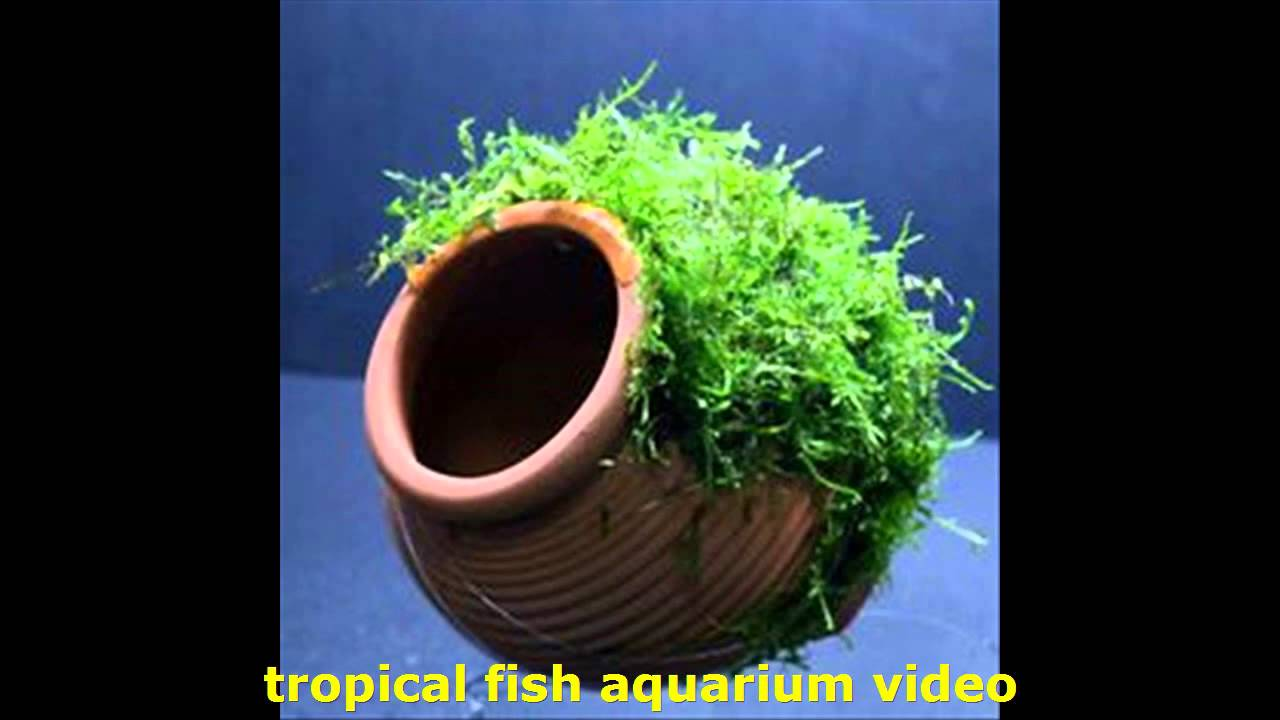 Tropical freshwater aquarium fish uk - Tropical Fish Aquarium Video Aquatic Gardens Uk Plants Fish Tanks And Fish For Your Fish Tanks