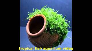 Tropical Fish Aquarium Video Aquatic Gardens Uk, Plants, Fish Tanks And Fish For Your Fish Tanks