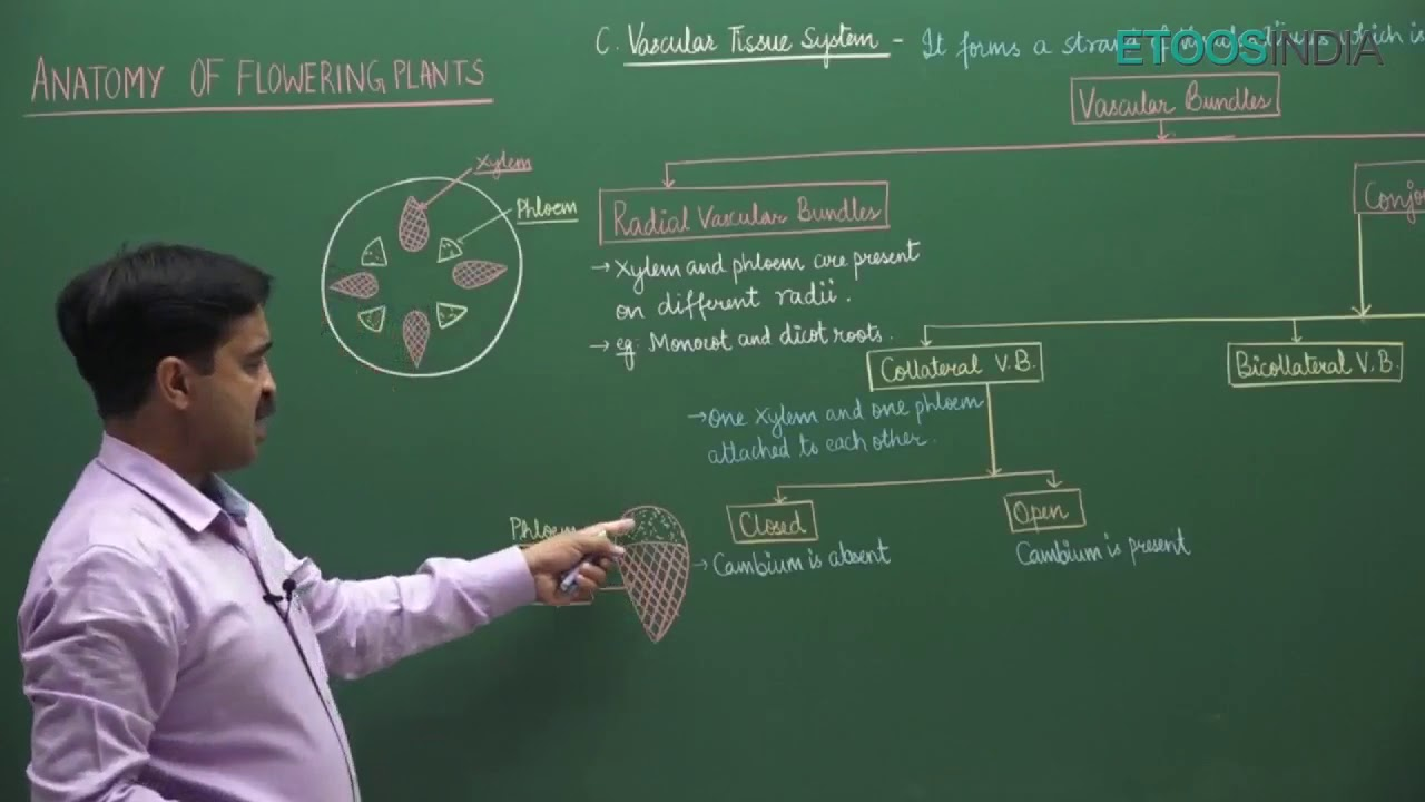 NEET video lectures of Anatomy of flowering plants by Himanshu ...