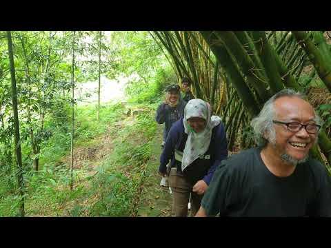 2-bambu-raksasa-asli-indonesia-ada-di-sini,-warnanya-hijau-dan-kuning
