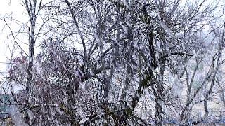 Метель. Сильный Снегопад. Зима. Видео Метель. Хлопья Снега. Футажи для видеомонтажа