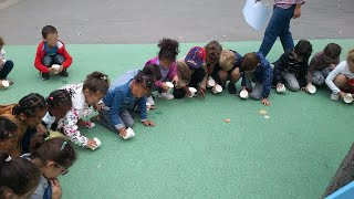 École maternelle Tandou : projet d'aménagement de la cour Oasis