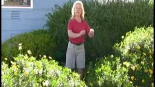 Installing A Picket Fence : Preparing The Yard For A Picket Fence