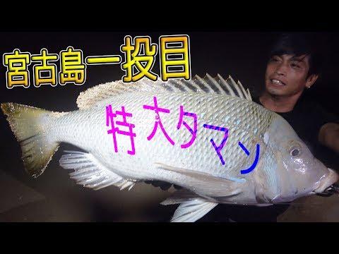 宮�島�GT狙����[宮�GT狙� 1/6]