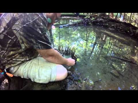 Episode 24   Fishing Weir