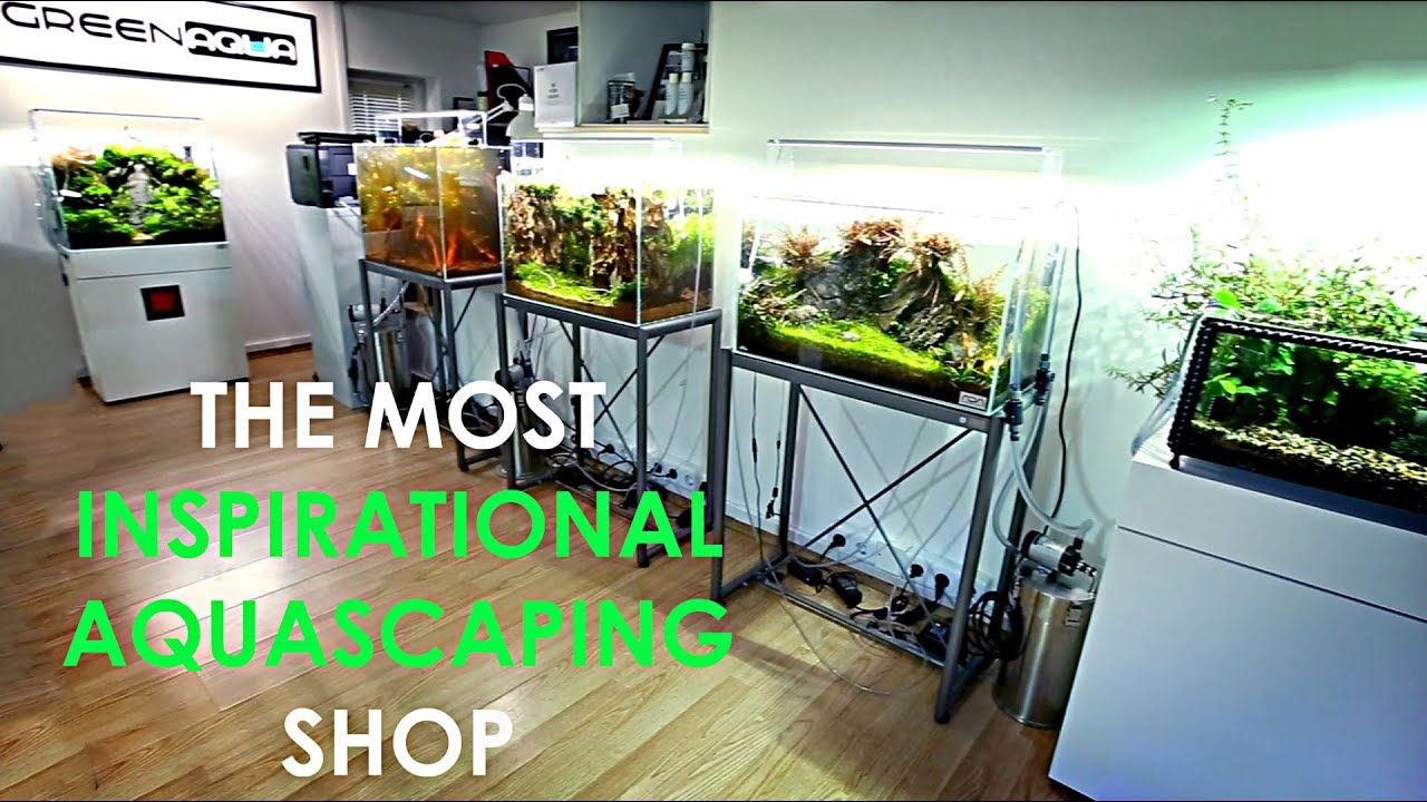 Is This The Best Aquascaping Shop In The World?!!  Youtube