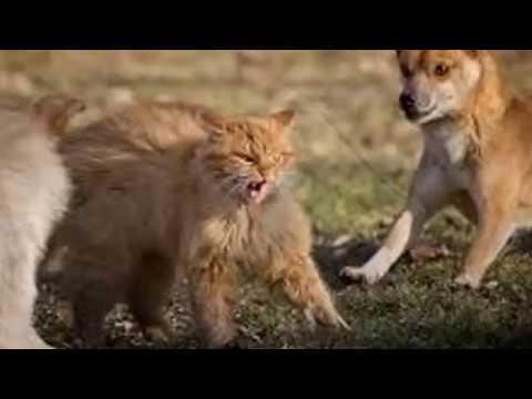Dog Interrupt Cat Fight