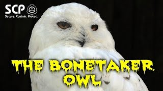 SCP-1049 The Bonetaker Owl | Object Class: Safe | Avian / hostile / skeletal scp