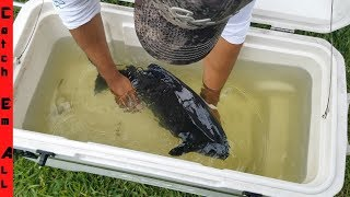 FISH RESCUE from SMALL POND Turns BAD!