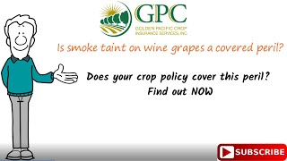 Smoke Taint Losses for Wine Grapes| Golden Pacific Crop Insurance| Grape MPCI Crop Insurance
