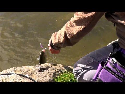 Honda 釣り倶楽部エリアフィッシング入門講座 CHAPTER 09 クランクベイトで釣ってみよう