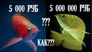 ТОП 5 Самые дорогие домашние животные