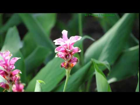 ครูแสง : เรียนลัดถ่ายภาพ 8 ดอกไม้ไทย-Thai Flowers Movie 2