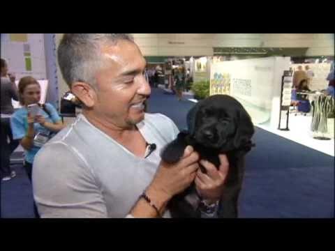P2H Pups meet Cesar Millan, The Dog Whisperer