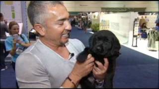 P2h Pups Meet Cesar Millan, The Dog Whisperer