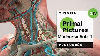 DOTLIB - Primal Pictures - Mini Curso (Aula 1)