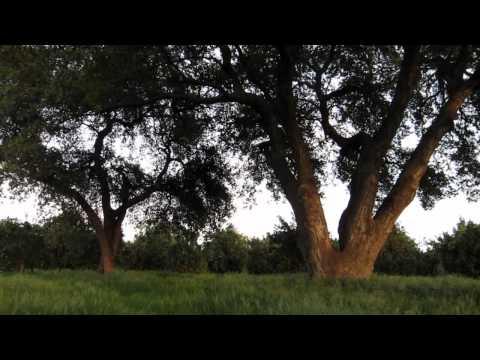 One Minute Meditation - Ojai #1