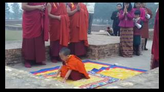 3 year old prince of bhutan cutly touch the  bodh land of shravasti