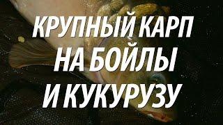 КРУПНЫЙ КАРП НА БОЙЛЫ И КУКУРУЗУ - КАРПФИШИНГ