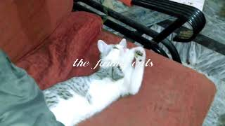 The funny Cats