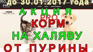 Корм на халяву для кошки и собаки до 30.01.2017 года | Промоакция с подарком от Proplan(, 2016-12-19T10:54:29.000Z)
