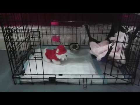 U Haul South Porcupine Houdini Puppy E...