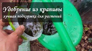 видео Удобрение из крапивы: как приготовить зеленое удобрение из травы и крапивы, применение