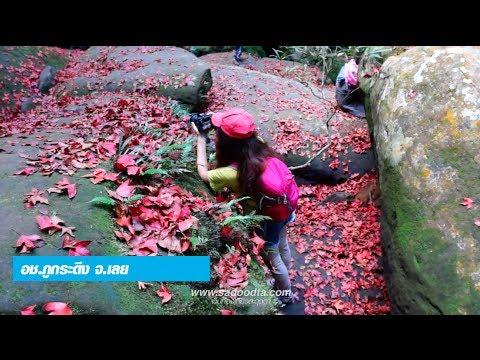 ใบเมเปิ้ลแดงบนภูกระดึงที่น้ำตกถ้ำใหญ่ (Red maple leaf at Waterfall)