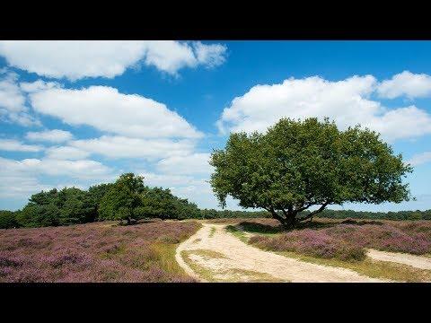 Op reis met Van Rossem, Gelderland Deel 1