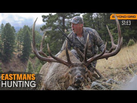 Giant Montana Bull Elk - 374
