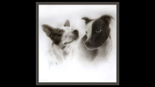 Dog Portrait Speed Drawing Timelapse: Coloured Pencil and Airbrush
